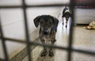 Entra em vigor lei que proíbe extermínio de cães e gatos saudáveis por órgãos públicos