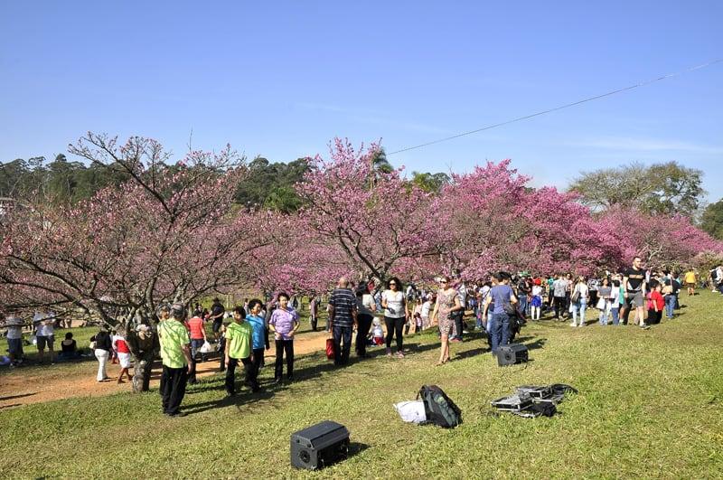 Garça adia Cerejeiras Festival pelo segundo ano consecutivo