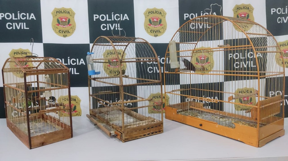 Polícia Civil de Jaú resgata quatro pássaros silvestres que eram mantidos em cativeiro
