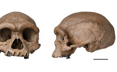 Fóssil de espécie mais próxima ao Homo sapiens é descoberto na China