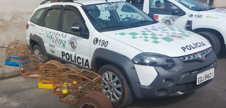 Governo do estado lança Procon-SP Ambiental e cria força-tarefa contra venda ilegal de madeira nativa