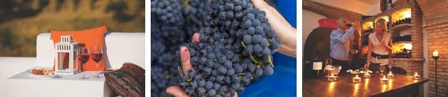 6 castas de uva do Alentejo e os tipos de viajantes com quem elas combinam